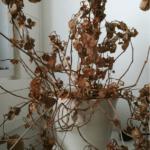 Bueropflanze Nach Sommerpause